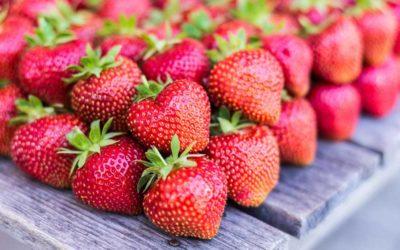 Ungespritzte Freiland-Erdbeeren vom Waltl-Hof